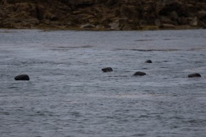 Diving with seals in the Scillies